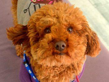 Dog Sonya